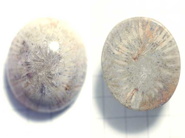 STK187T 20.6×17.2 オーバル 菊目石